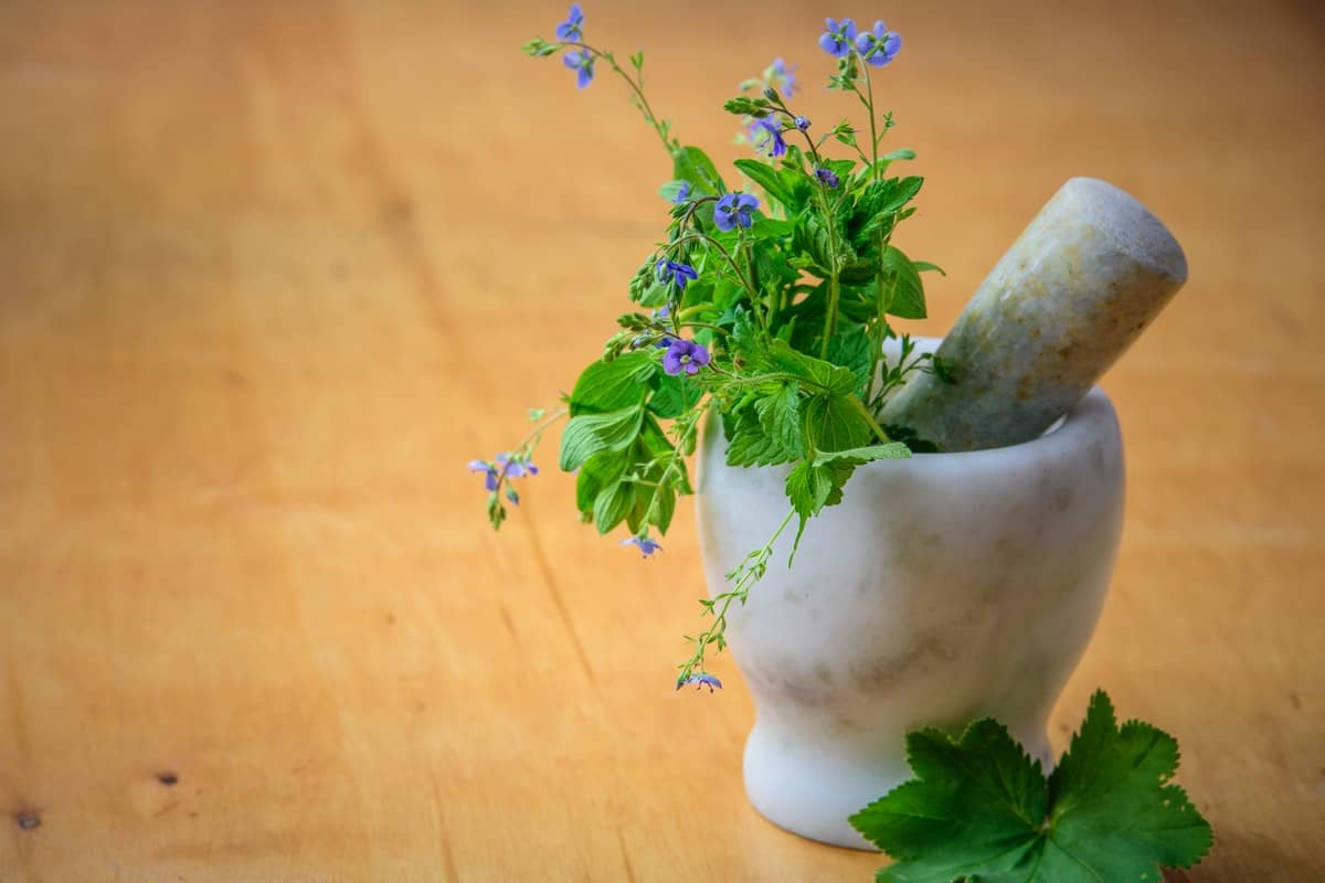 11 Herbs to Fight Your Seasonal Allergies
